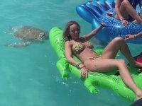 Şişme Timsaha Saldıran Kaplumbağa