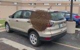 Arabaya Oğul Yapan Arılar
