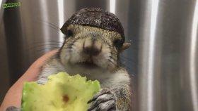 Hayvan Videoları Izle Bu Hafta Izlesenecom