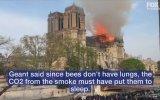 Notre Dame'ın Arıları
