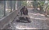 Ulaşımı Bedavaya Getiren Maymun
