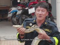 Piton Yılanı Saldırısından Nasıl Kurtulunur?