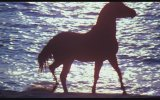 The Black Stallion (1979) Fragman