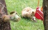 Kedinin Fare ile Oynadığı Gibi Oynamak