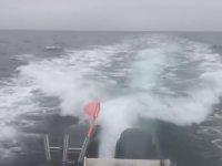 Tekneyi Kovalayan Katil Balinalar