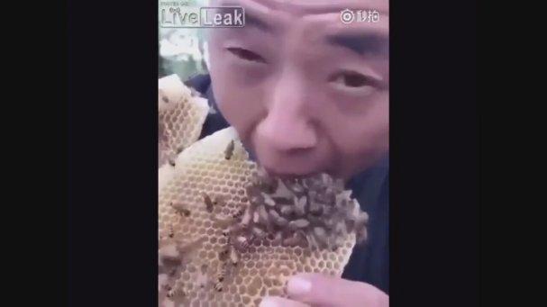 Petek Balı Üzerindeki Arılarla Yemeye Çalışan Koniçiva