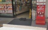 Keyfine Düşkün Kara Kedi
