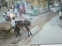 At Arabasına Arkadan Çarpmak