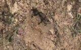 Dev Örümcek İle Akrebin Ölüm Kalım Mücadelesi