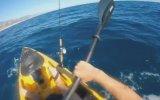 Köpek Balığına Küreğiyle Karşı Koyan Eleman
