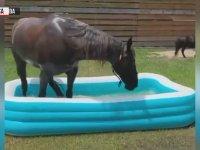 Şişme Havuzda Eğlenen At