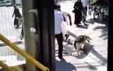 Köpeğe Eziyet Ettiği İçin Dayak Yiyen Suriyeli