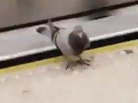 Metroyu İplemeyen Güvercin
