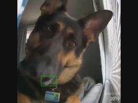 Şapşik Köpeğin Güvenlik Kamerası ile İmtihanı