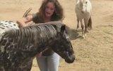 Şarkıya Eşlik Eden At
