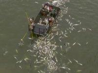 Elektroşok ile Balığın Kökünü Kurutmak