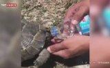 Kaplumbağaya Su İçiren Polis