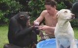 Şempanzelerle Birlikte Köpeğini Yıkayan Adam