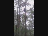 Saniyeler İçinde Ağaca Tırmanan Adam
