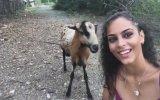 Selfie Çekinen Kıza Toslayan Keçi