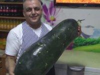 80 Santimetre Uzunluğundaki 21 Kilogramlık Dev Salatalık