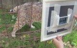 Ayna Karşısında Kendilerini Gören Vahşi Hayvanlar