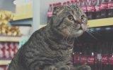 Kediler Alışverişte