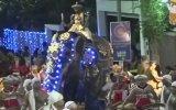 Sri Lanka'da İnsanları Ezen Fil