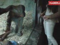 Maymunun Karşısında Soyunan Kadın