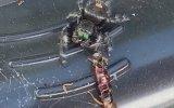 Örümceğin Avına Ortak Olan Arı