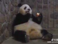 Elmaya Evladını Satan Panda