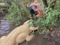 Albino Timsahı Elleriyle Besleyen Bakıcı Kadın