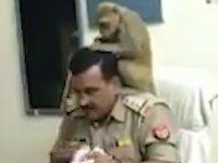Çalışırken Maymuna Saç Bakımını Yaptıran Polis