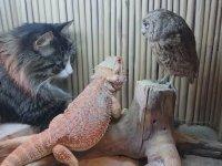 Kedi, Baykuş ve Kertenkele Dostluğu