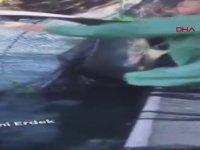 Köpek Balığını Tekme Tokat Döven Yurdum İnsanı