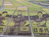 Ragbi Oyuncularının Resmini Pirinç Tarlasına İşlemek