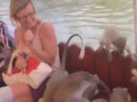 Turistlerin Teknesini Yağmalayan Maymunlar