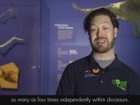 Yarasa Kanatlı Minyatür Dinozor Ambopteryx