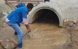 4 Metrelik Kral Kobra Yılanı Kanalizasyondan Çıkarıldı