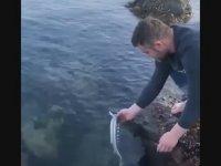 Denize Bırakılan Mersin Balığının Dönüp Teşekkür Etmesi