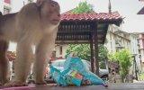Ortalığı Dağıtan Maymun