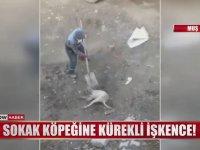 Sokak Köpeğine Kürekle Müdahale Eden Belediye Çalışanı