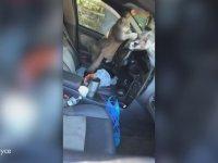 Arabanın İçinde Çıldıran Kediler