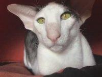 Çirkin Görünümlü Sevimli Kediler