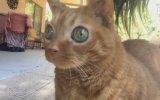 Gözleriyle Fark Yaratan Kedi