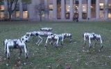 Robot Köpeklerin Futbol Maçı