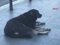 Taksim'de 1 Ayda 30 Kişiyi Isıran Köpek