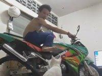 Ayak Marşı ile Motosiklet Çalıştırılmasına Karşı Olan Kedi