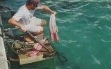 Eliyle Köpek Balığı Besleyen Adam