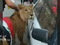 Protestolara Aslanı ile Katılan Iraklı